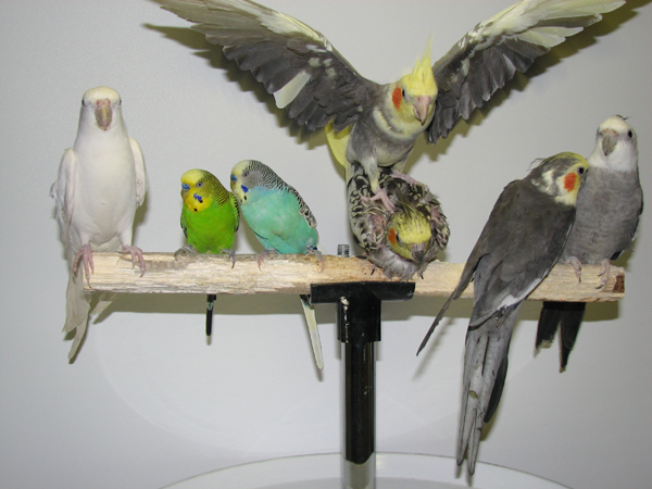 photo of birds